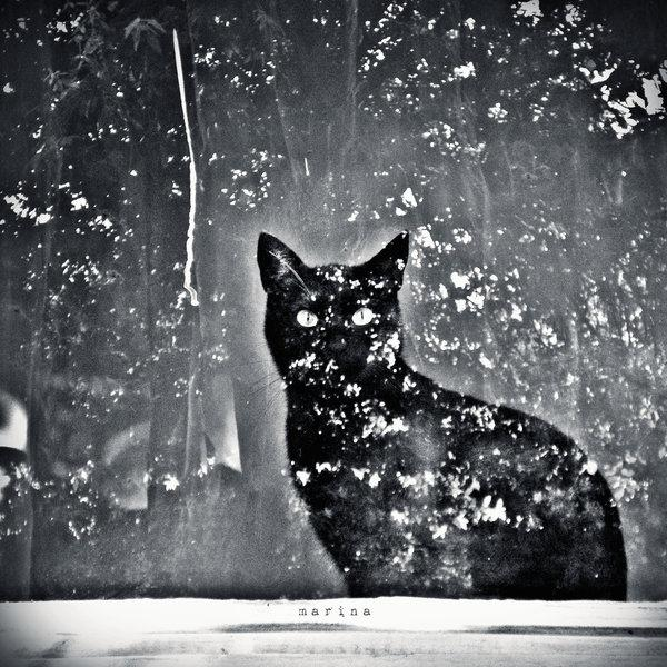 animal, cat, dark