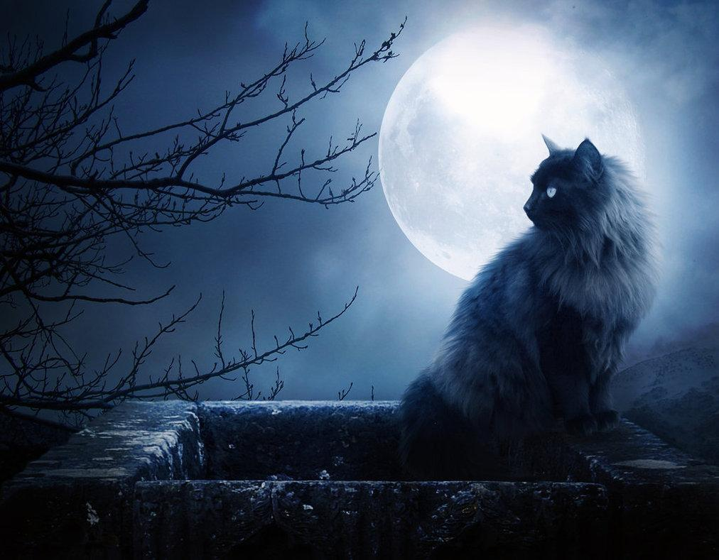 moon, night, dark beauty, cat, creepy, dark art
