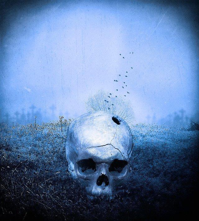 skull, scary, dark, death