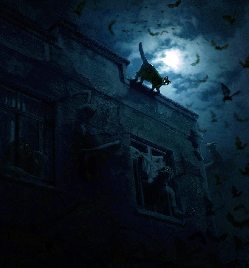 cat, animal, haunted