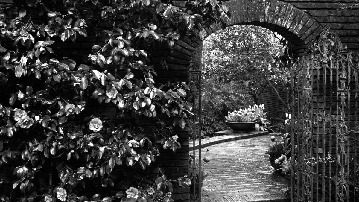garden, black and white, dark, sad, sad beauty