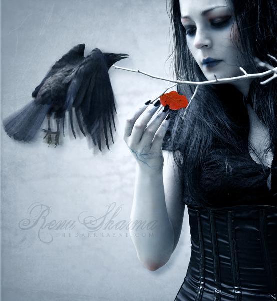 rose, animal, crow, girl