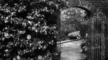 garden,black and white,dark,sad,sad beauty
